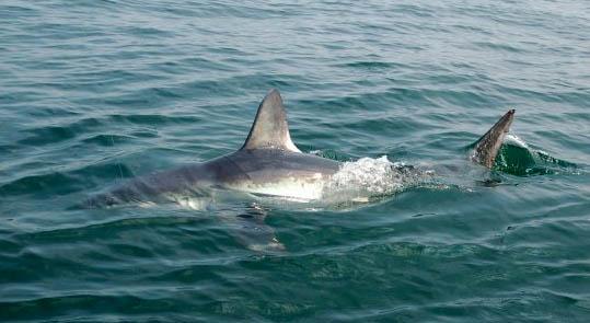 Photos maine fishing charter for Deep sea fishing maine