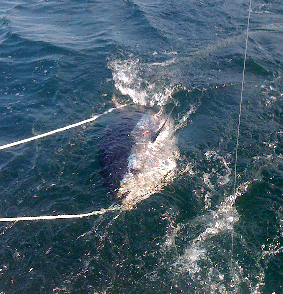 Photos maine fishing charter for Portland maine fishing